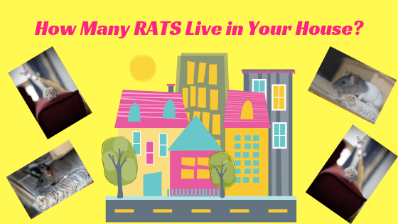Pictures of houses in a city and photos of rats